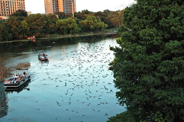 """Austin Bats #2"" ~ Mexican free-tailed bats stream out over Lady Bird Lake in Austin, TX at twilight."
