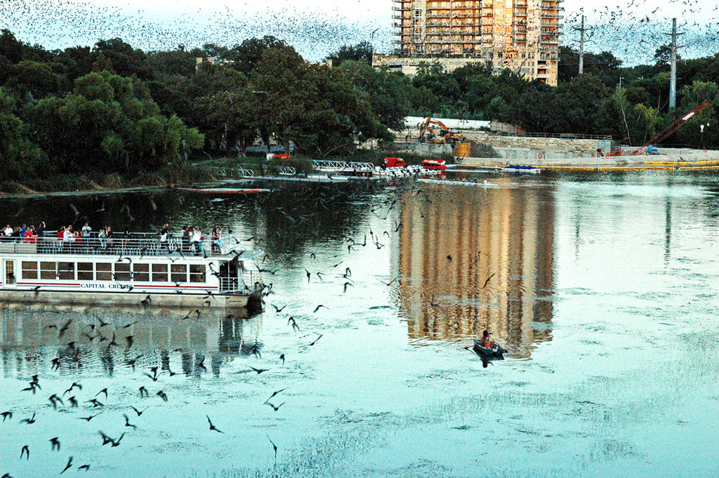 """Austin Bats #3"" ~ Mexican free-tailed bats stream out over Lady Bird Lake in Austin, TX at twilight."
