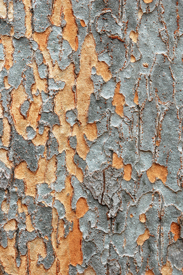 """Bark"" ~ Close-up of intricate orange and grey patterns of tree bark."