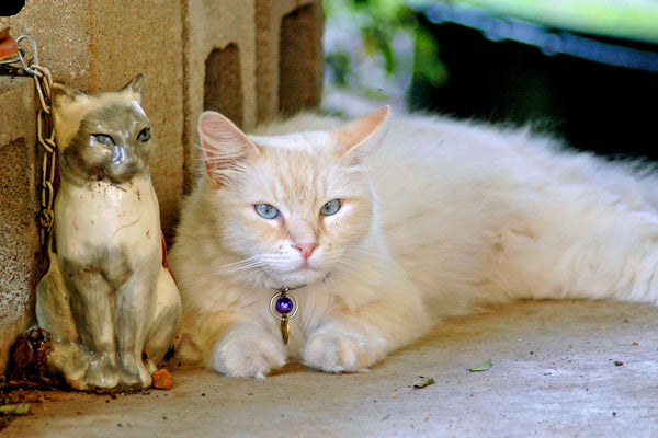 """Batiste & Lily"" ~ Batiste the fluffy white cat hangs out on the porch with his ceramic siamese cat buddy Lily."