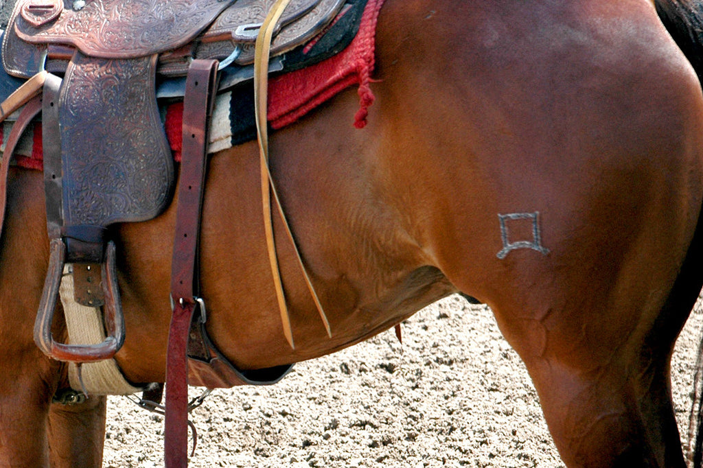 """Bay"" ~ Close-up of a bay horse with saddle. Del Rio, TX"
