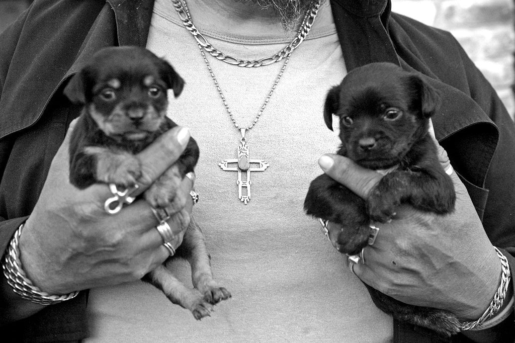 """Bear and Pups"" ~ Close up of two puppies held by an man named Bear. Austin, TX"