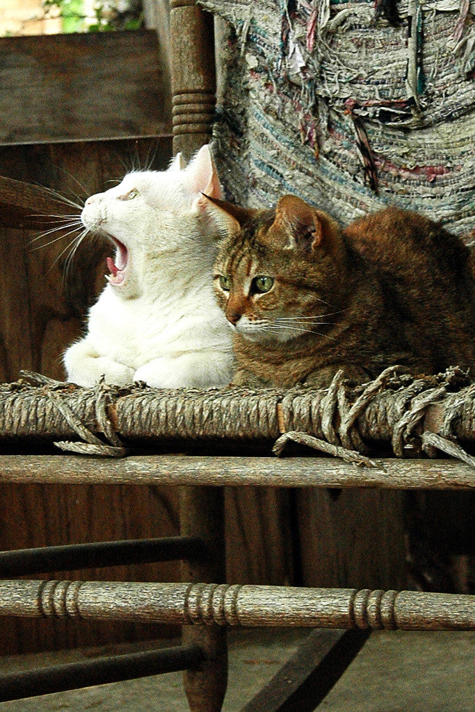 """Bird Bombs!!!"" ~ Two cats in a rocking chair and one looking very surprised."