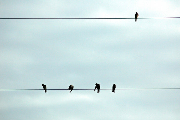 """Bird On a Wire"" ~ Birds sitting on high wires with a cloudy sky behind them."