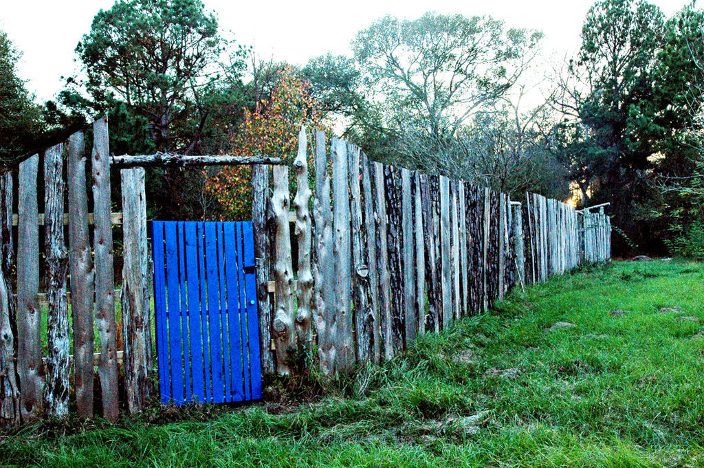 """Blue Door"" ~ A wooden fence with a bright blue door in the Texas countryside."