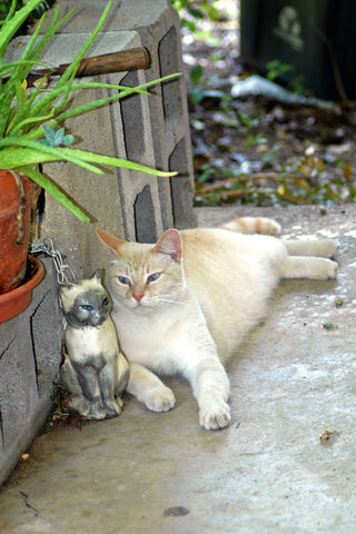 """Budreau & Lily"" ~ A real white cat hangs out on the porch with a ceramic cat."
