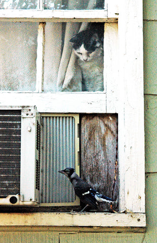 """Budwina & the Bluejay"" ~ A cat sits looking out a window at a young and unsuspecting bluejay."