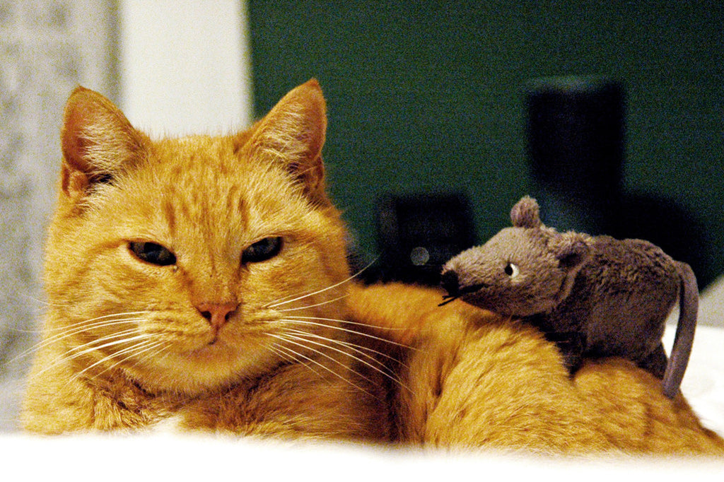 """Cat and Mouse"" ~ Little stuffed mouse sits on top of Buddha the cat."