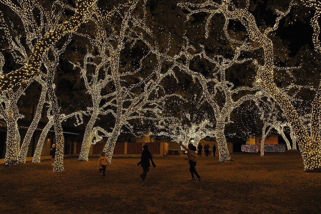 """Christmas Forest #3"" ~ The Pedernales Electric Co. in Johnson City, TX wraps its oak trees in white lights. Photo by Ann Woodall"