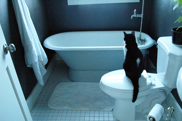 """Contemplation"" ~ A black and white cat sits on the toilet staring at the bathtub."