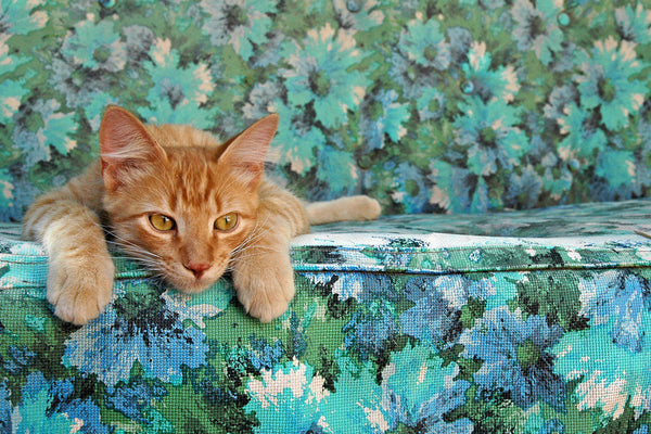 """Daydream"" ~ Orange cat lying on a blue floral sofa. Photo by Ann Woodall"