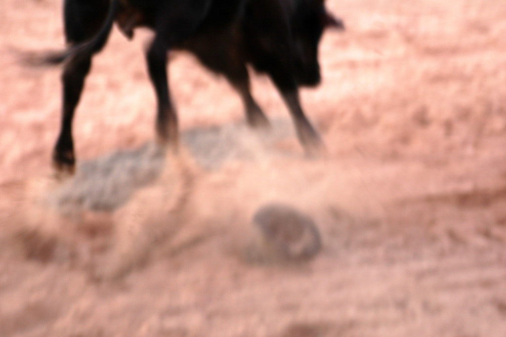 """El Toro"" ~ Close up of a bull in action at the Superbull bull riding event, Del Rio, TX. Photo by Ann Woodall"