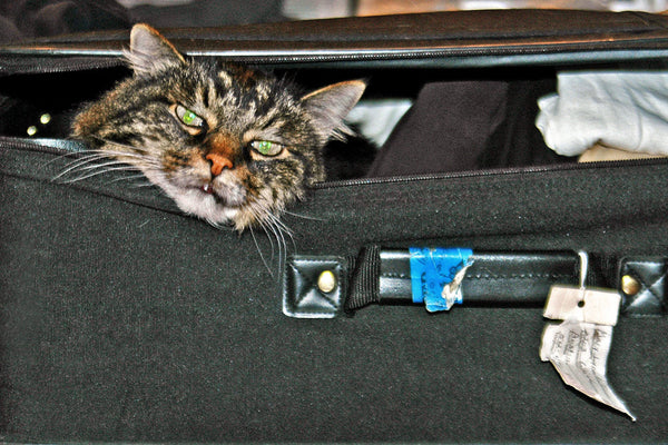 """Going My Way?"" ~ Angry looking cat in a suitcase. Photo by Ann Woodall"