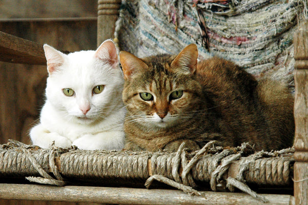 """Ma & Pa Kettle"" ~ Two cats sitting on a rocking chair. Photo by Ann Woodall"
