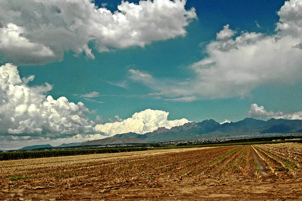 """New Mexico Field"" ~ Open field with mountains in the background. Photo by Ann Woodall"