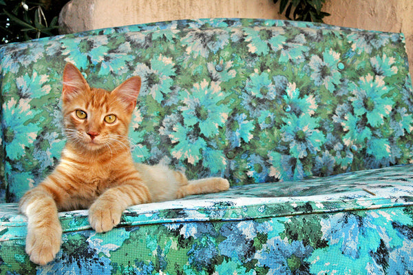 """No Way, Dude"" ~ An orange tabby cat sits on an outdoor couch. Photo by Ann Woodall"