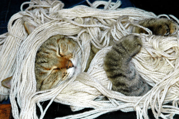 """Noodlehead"" ~ Suki the cat asleep in a tangle of yarn. Photo by Ann Woodall"