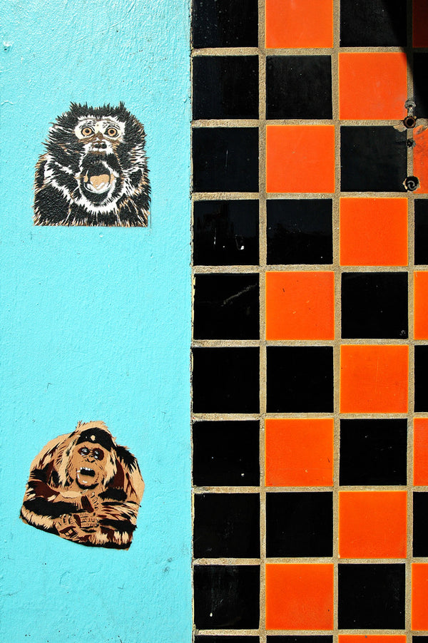"""Primate Wall"" ~ Monkey stickers on a blue wall next to an orange and black checkered wall. Photo by Ann Woodall"