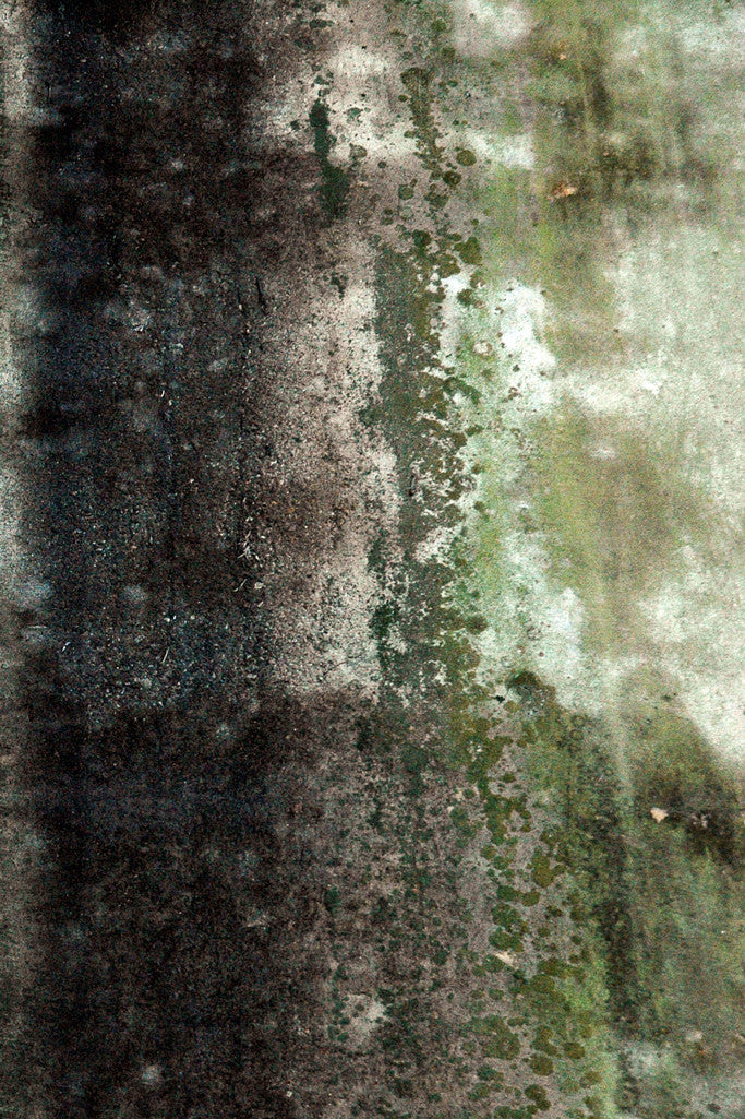 """Wall #19"" ~ Concrete wall with gorgeous green organic abstract patterns. Photo by Ann Woodall"