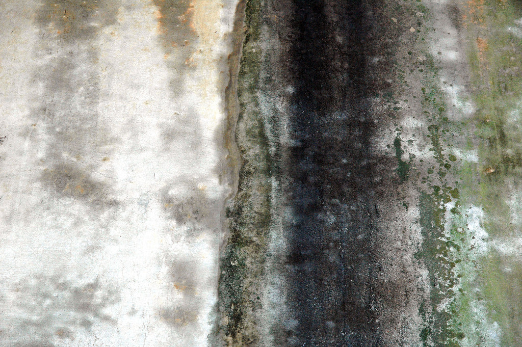 """Wall #20"" ~ Concrete wall with organic green textures and patterns. Photo by Ann Woodall"