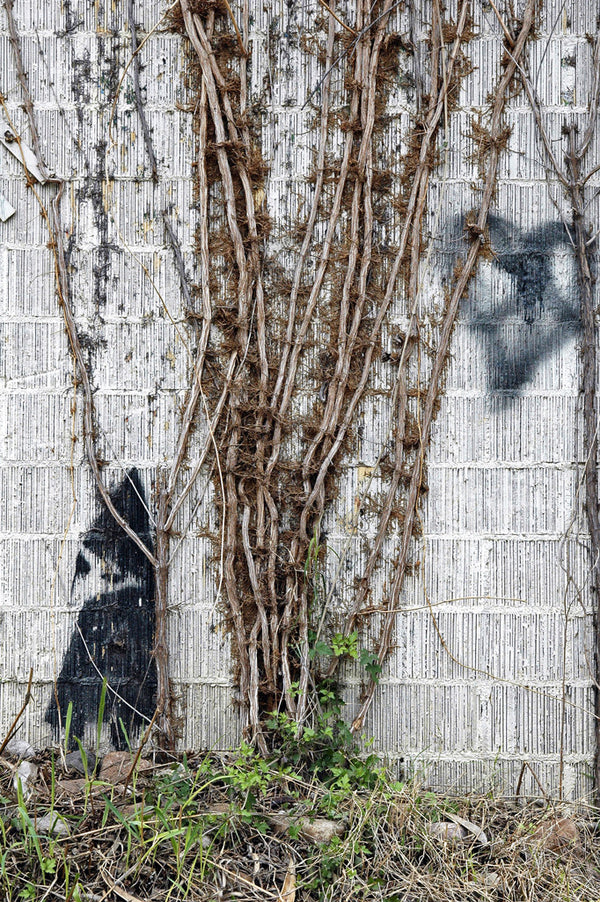 """Yard Gnome"" ~ A graffiti gnome is placed among wall vines. Photo by Ann Woodall"