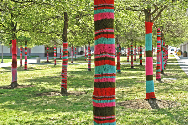 """Yarn Bomb #5"" ~ Trees with knitted tree sweaters. Photo by Ann Woodall"