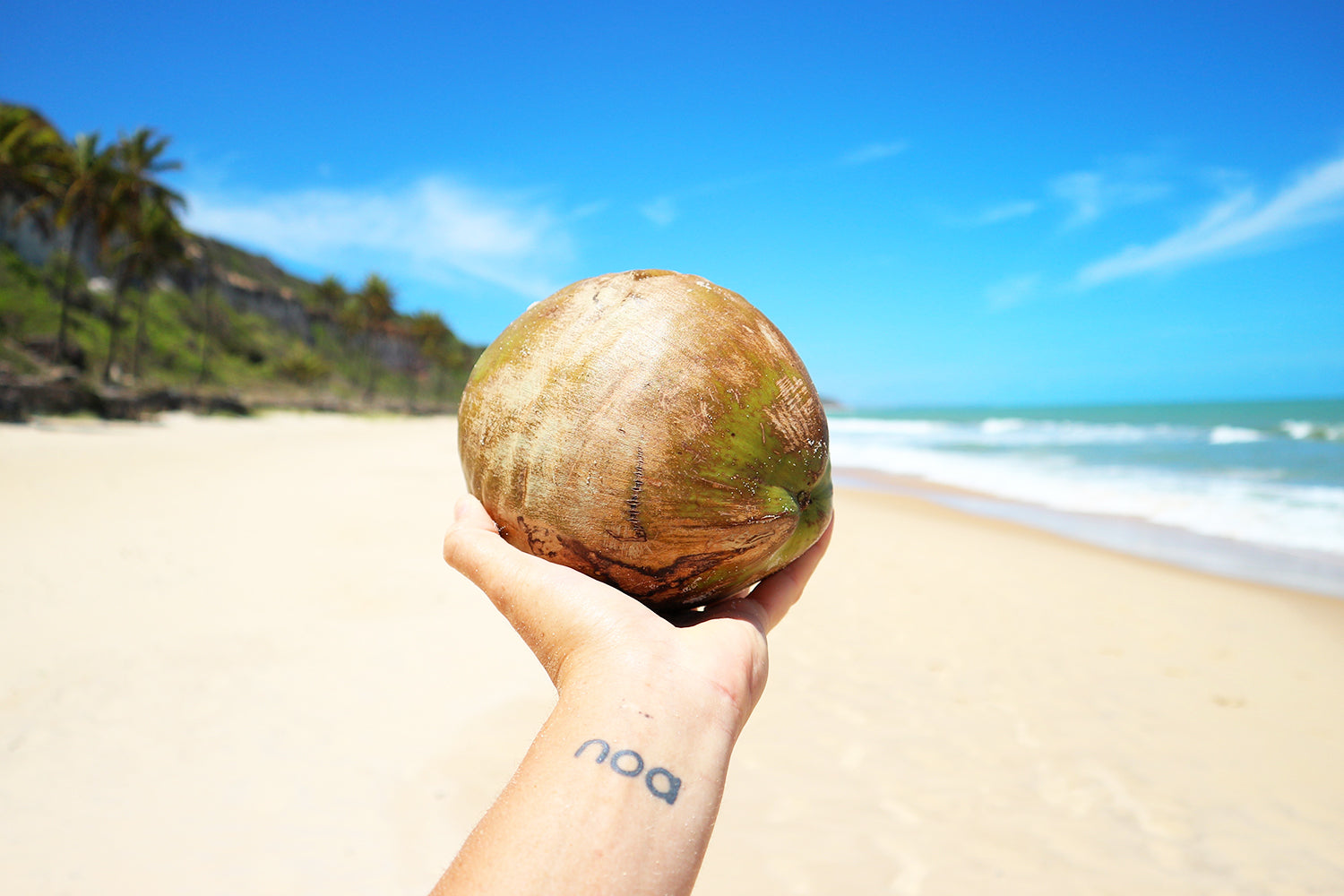 The Truth About the Coconut Craze