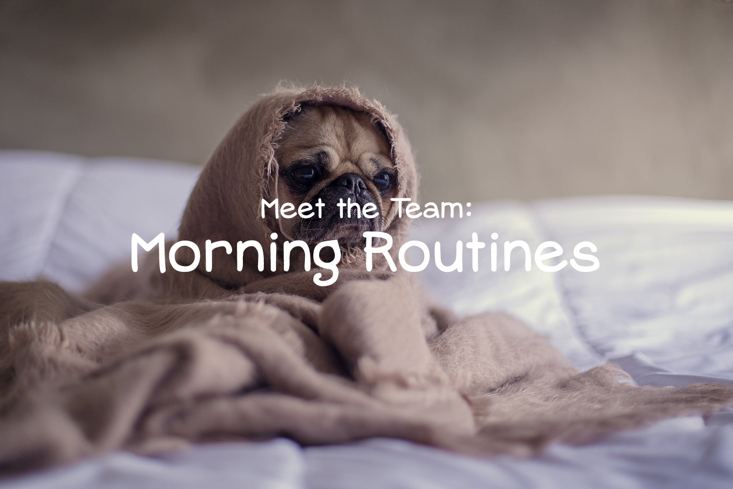 Meet the Team: Tried and True Morning Routines