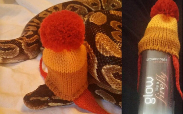 Customers Make Our Dreams Come True #1: Snake In A Hat