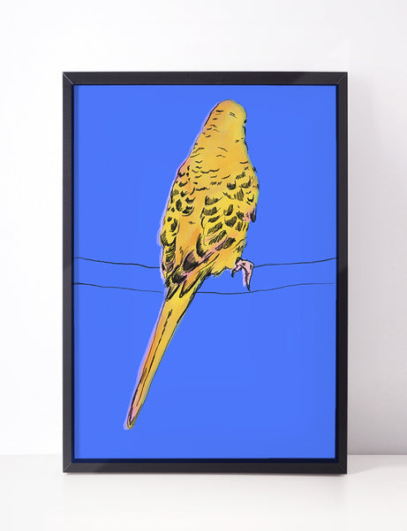 'Where' - The Yellow Budgie