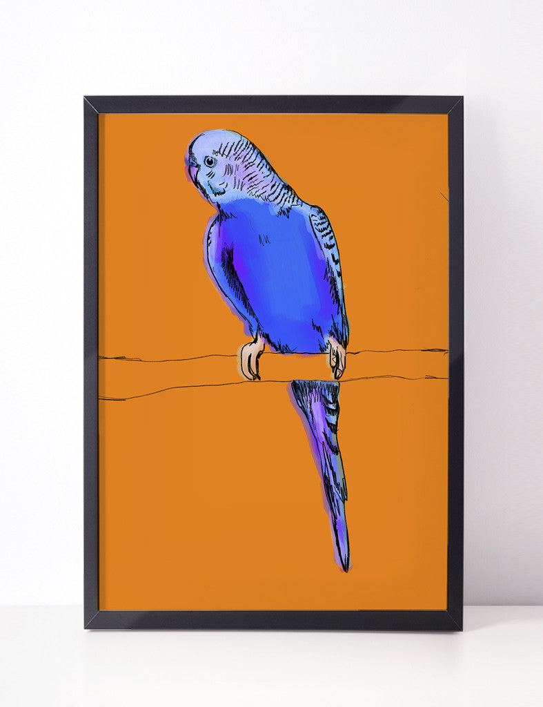 'What' - The Blue Budgie