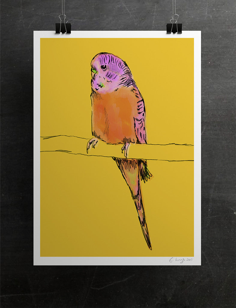 'Why' - The Orange Budgie
