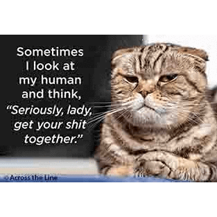 Sometimes I look at my human... magnet Ephemera Home Decor/Kitchenware