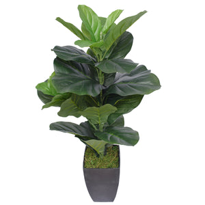 Dense Fiddle Leaf Fig Tree 70cm