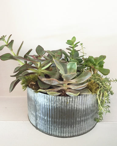 Large Tin Succulent Arrangement