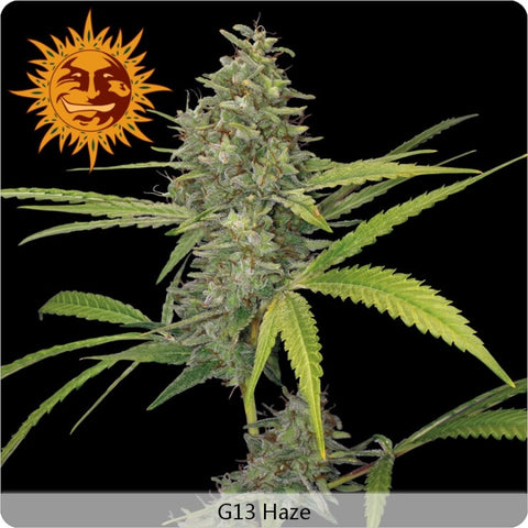 Barney's Farm - G13 Haze - 5-Pack Feminized
