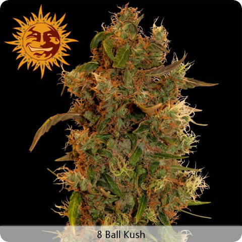 Barney's Farm - 8-Ball Kush - 5-Pack Feminized