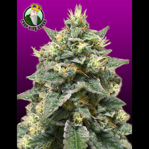 Crop King Seeds - Azura Haze - 5-Pack Feminized