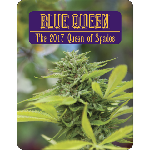 7 Aces Seeds - Blue Queen - 15-Pack Regular / Photoperiod (Not Feminized)