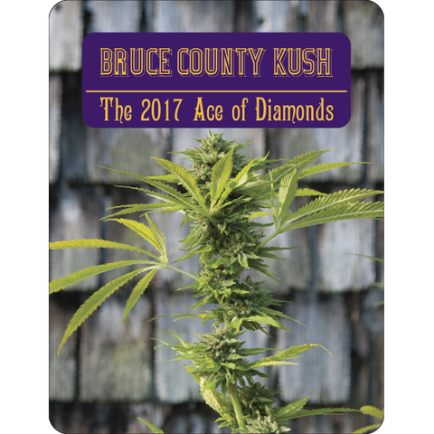 7 Aces Seeds - Bruce County Kush - 15-Pack Regular / Photoperiod (Not Feminized)