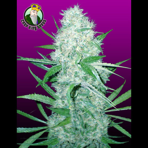 Crop King Seeds - Cali OG Kush Haze - 5-Pack Feminized