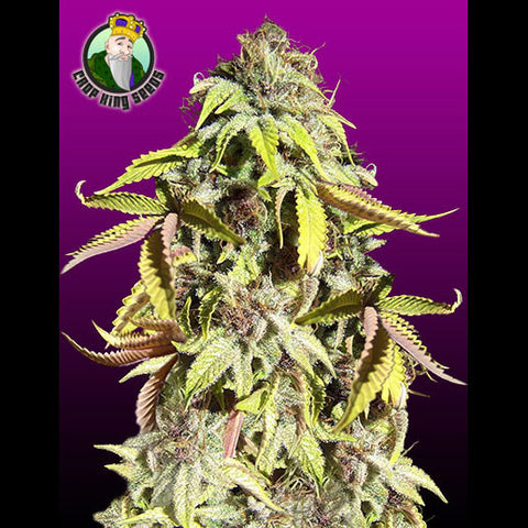 Crop King Seeds - Crown Royale - 5-Pack Feminized
