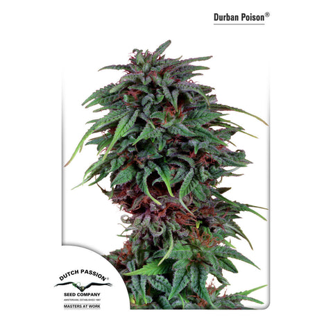 Dutch Passion - Durban Poison - 5-Pack Feminized