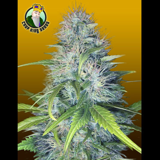 Crop King Seeds - Early Miss (Autoflowering) - 5-Pack Feminized