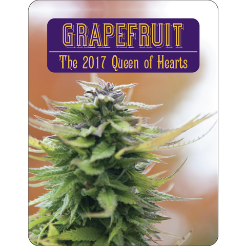 7 Aces Seeds - Grapefruit - 15-Pack Regular / Photoperiod (Not Feminized)