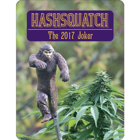 7 Aces Seeds - Hashsquatch - 15-Pack Regular / Photoperiod (Not Feminized)