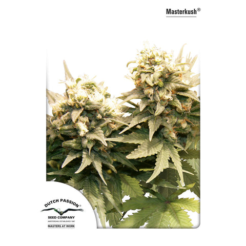 Dutch Passion - Masterkush - 5-Pack Feminized