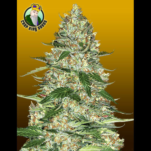 Crop King Seeds - Northern Lights Auto (Autoflowering) - 5-Pack Feminized