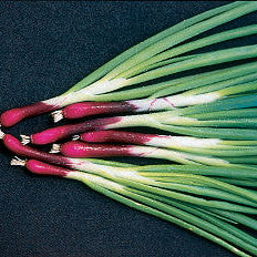 Onion - Deep Purple Bunching Onion Seed Pack (Allium fistulosum 'Deep Purple Bunching')