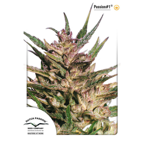 Dutch Passion - Passion #1 - 5-Pack Feminized